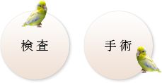 小鳥の検査 手術