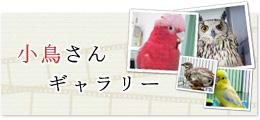 小鳥さんギャラリー